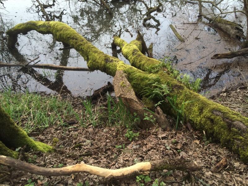 Oaks Bottom Wildlife Refuge, by Andrew Mackay