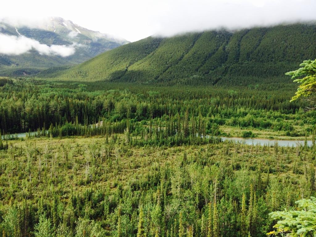 West of Muncho Lake, British Columbia. Photo by Andrew Mackay